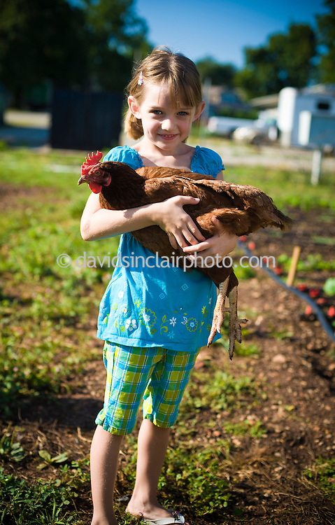 8/9/11 - Springfield, MO: The Millsaps benefit from a community of friends and neighborhood volunteers. Here Jane Murr, daughter of family friend Kate Murr, holds Strawberry - the favorite of the five chickens kept by the Millsaps, for her friendly demeanor and gentle nature with kids.