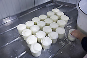 making of sheep cheese filling the pots for first stage of drying