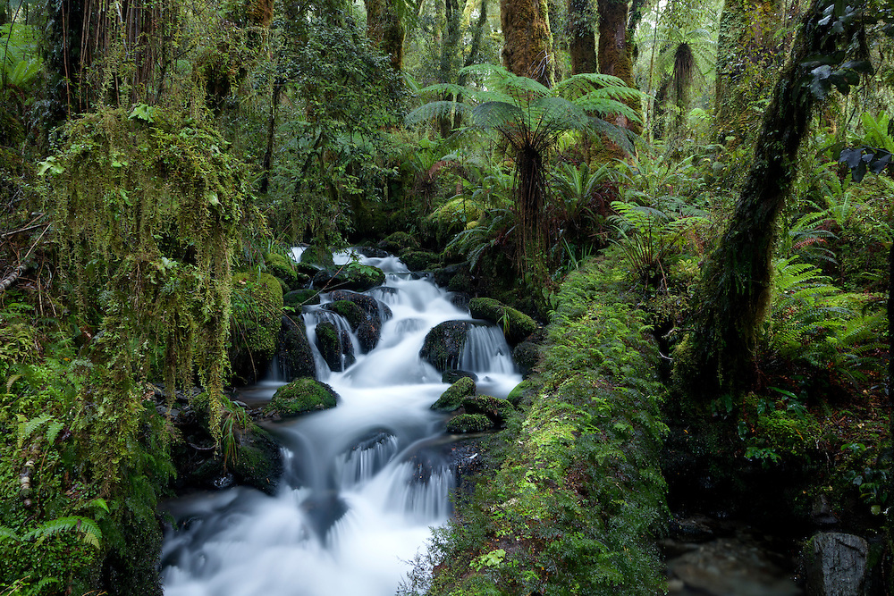 Stream and fallen log in beech forest, Near Tuning Forks creek, Haast range.