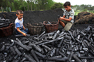Idalina Moita's  son Ricardo (R) and grandson Andre take some of the vacations time to help her to pick up the sharcoal. In the village of Pilado in the county of Marinha Grande, sharcoal production goes back to the sixth century, always executed by women, today due to unemployment, men are taking the responsability for this handicraft industry. Sharcoal is used as an alternative  power, most of all to grill.Paulo Cunha/4see.