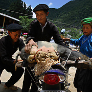 Hmong villagers mount a wild pig onto a motorbke at the Sa Phin Market in Ha Giang, Vietnam's northernmost province, 22 June, 2007. As cities like Hanoi and Ho Chi Minh roar with Vietnam's economic boom, Ha Giang remains a quiet, serene and beautiful mountain backwater along the Chinese border.