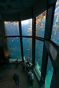 Monterey California USA, display windows in the underwater room of the Monterey bay Aquarium