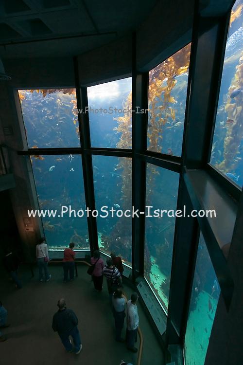 Monterey California USA, display windows in the underwater room of the Monterey bay Aquarium