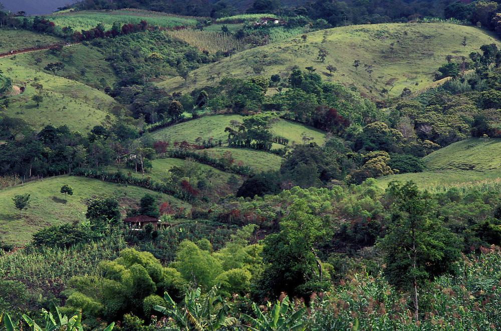 COLOMBIA: Huila.Coffee region