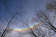 A circumzenithal arc appears to stretch across the tops of trees on Cougar Mountain near Bellevue, Washington. Circumzenithal arcs appear as upside-down rainbows and are the brightest and most colorful of all the solar halos. They appear when the sun is relatively low on the horizon, less than 32 degrees above the horizon and ideally 20°, and cirrus clouds are overhead. Circumzenithal arcs are especially bright and vibrant because the ice crystals in the cirrus clouds are perfectly aligned, passing through almost parallel bands of light.