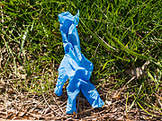 """01 APRIL 2020 - DES MOINES, IOWA: A used nitrile glove on the street in downtown Des Moines. On Sunday morning, 04 April, Iowa reported 786 confirmed cases of the Novel Coronavirus (SARS-CoV-2) and COVID-19. There have been 14 deaths attributed to COVID-19 in Iowa. Restaurants, bars, movie theaters, places that draw crowds are closed until 07 April. The Governor has not ordered """"shelter in place"""" but several Mayors, including the Mayor of Des Moines, have asked residents to stay in their homes for all but the essential needs. People are being encouraged to practice """"social distancing"""" and many businesses are requiring or encouraging employees to telecommute.         PHOTO BY JACK KURTZ"""