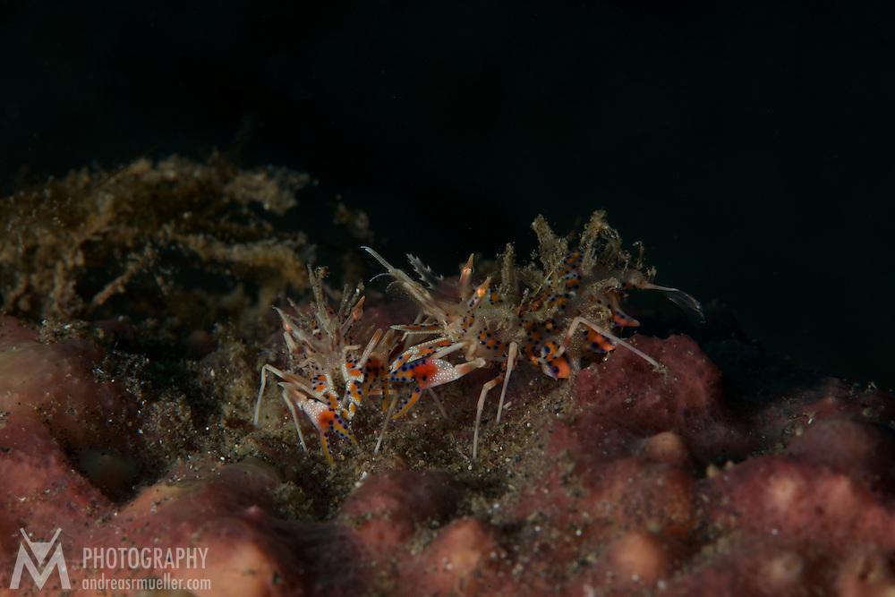 Dive Spot: Air Bado II