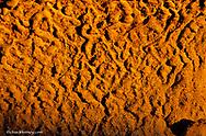 Closeup look at sandstone patterns in badlnads of Dinosaur Prvincial Park in Alberta Canada