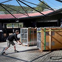 Frankrijk Lieusaint,21 mei 2015.<br /> Stichting AAP die zich inzet voor opvang en welzijn van verwaarloosde dieren waaronder diverse apensoorten haalt nu verwaarloosde 2 tijgers en 2 leeuwen op bij een failliete circus in het plaatsje Lieusaint in de buurt van Parijs om ze vervolgens een betere toekomst te geven in opvangcentrum Primadomus in de buurt van Alicante Spanje.<br /> Op de foto: Een totaal uitgeputte tijger in dierenopvang Primadomus Alicante na een lange tocht vanuit Frankrijk wil zijn transportkist niet uitkomen.<br /> Een hogedruk spuit zorgt ervoor dat hij zijn kist verlaat.<br /> <br /> <br /> <br /> Foto: Jean-Pierre Jans