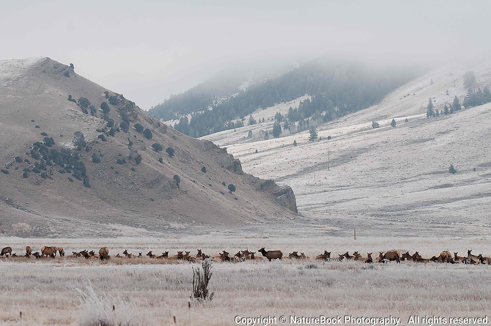We're at the National Elk Refuge at Grand Teton National Park.  With a temperature of about 18 degrees Fahrenheit and low clouds moving in, the Elk herd will see more snow and even colder temperatures as the sun sets.