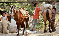 LA REINA, CHALATENANGO, EL SALVADOR- MAY 2000: Young boys load bags of sand onto mules near La Reina, El Salvador. The sand will be used in town construction projects to make mortar.  (Photo by Robert Falcetti). .