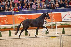 553, Kremlin MD<br /> KWPN Stallionshow - 's Hertogenbosch 2018<br /> © Hippo Foto - Dirk Caremans<br /> 02/02/2018