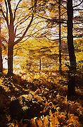 PA landscapes