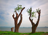 Taken at the lake of Bolsena on a windy evening.
