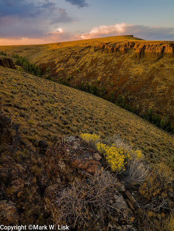 Rabbit Brushs blooms in early fall along Zeno Canyon in the Owyhee Canyonlands, Idaho.