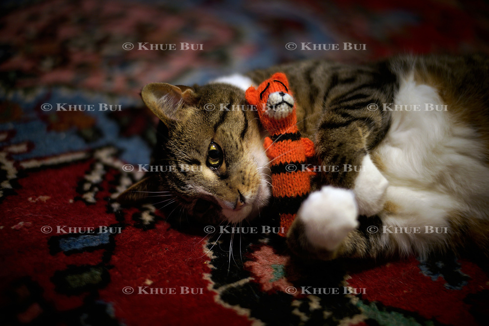 Mochi plays with her new toy, 2018, in Richmond, VA.<br /> <br /> Photo by Khue Bui