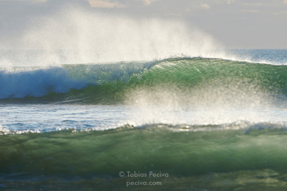 Late afternoon sun illuminating barreling waves at Muriwai Beach, north of Auckland, New Zealand.