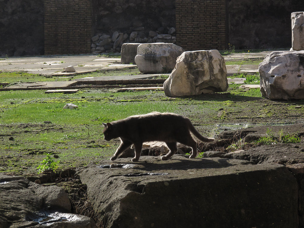 Cat resident in Trajan's Markets area patrols Trajan's Forum.  Many ancient Roman sites are also cat sanctuaries.