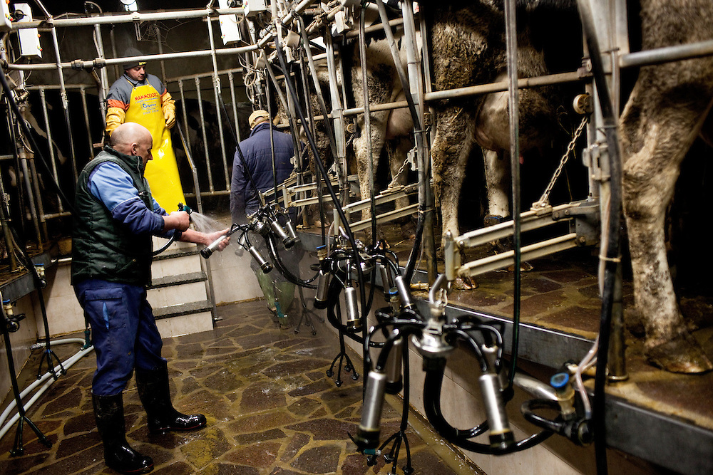 Azienda agricola Fratelli Boldini, a poco meno di un chilometro dal Ticino. Le oltre cento vacche sono munte due volte ogni giorno, tutti i giorni, sabato e domenica compresi. Tra le 4-5 e 6-7 del mattino e tra le 16-17 e le 18-19. I fratelli Boldini controllano la mungitura automatica  delle vacche.