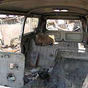 Goat in abandoned Volkswagen Bus in Port au Prince, Haiti