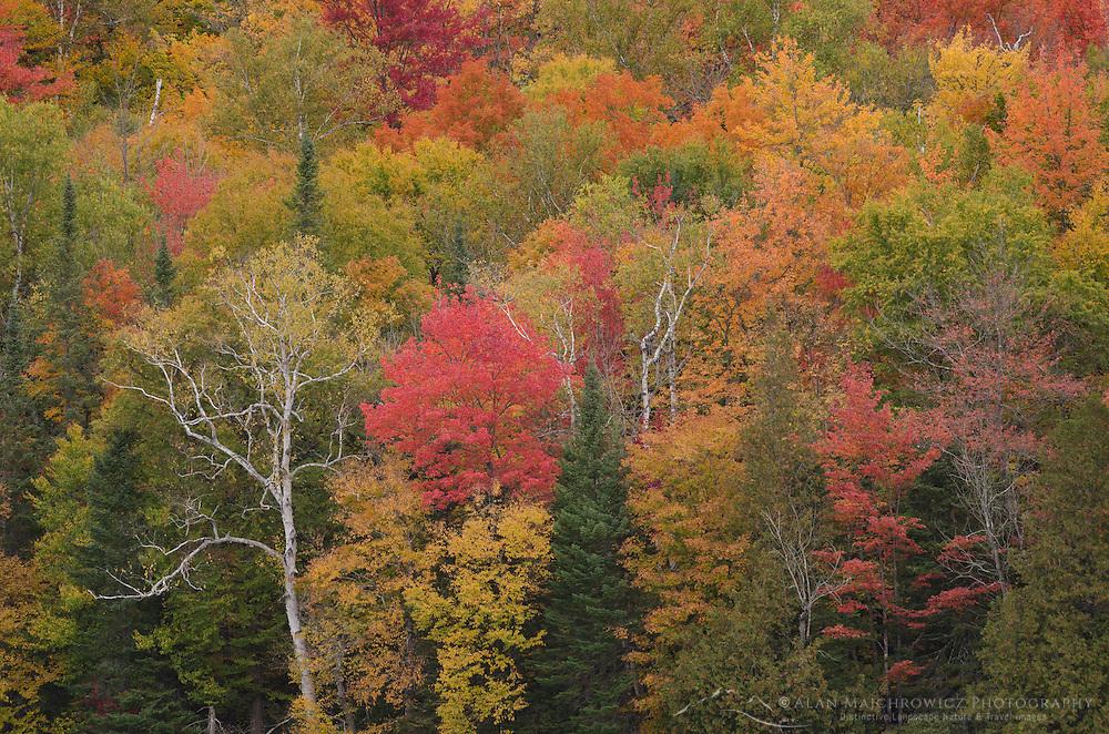 Fall Foliage, Groton Woods, Vermont