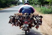 «Une p'tite balade a? moto mon poulet» qu'il disait. Cot Cot, on s'en souviendra, cot-cot-coooott!.Sur une route tout pre?s de Phnom Penh, la capitale du Cambodge....