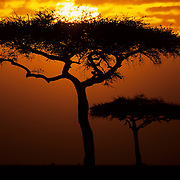 Sunrise in the Masaii Mara Game Reserve, Kenya.
