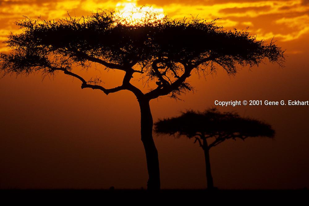 Sunrise in the Masaii Mara Game Reserve, Kenya.