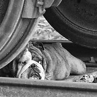 Goa hiding under the train