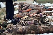 Christmas Eve, 1989. Temesvar, Rumania. In the town where the revolt against Ceausescu started, several dozen bodies?said to be victims of Securitate?later turn out to have been stolen from the hospital's morgue. (Photo Heimo Aga)