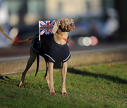 """A dog has a union jack flag attached which reads """"Welcome Home Jenny"""" - Photo mandatory by-line: Dougie Allward/JMP - Tel: Mobile: 07966 386802 03/03/2014 -"""