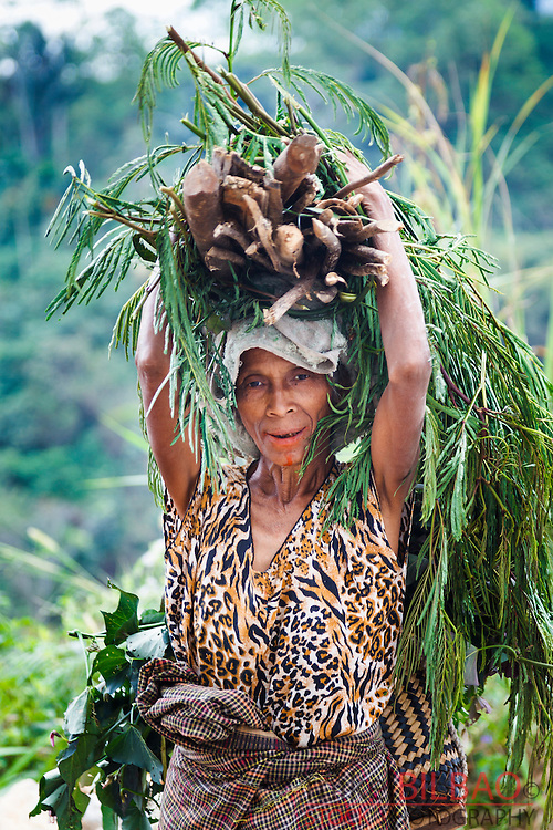 Woman picking up wood. Flores island.  Indonesia, Asia.