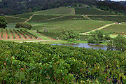 Hunter Valley Vineyard, NSW, Australia
