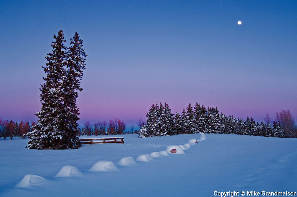 moonrise at dusk in winter<br /> Birds Hill Provincial Park<br /> Manitoba<br /> Canada