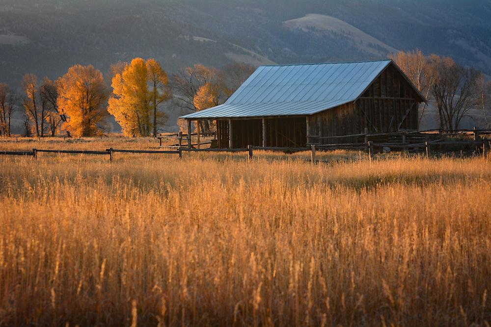 A homesteader's barn in early morning light, Grand Teton