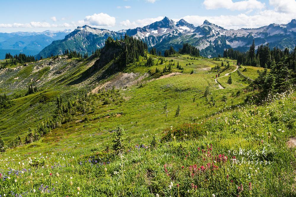 Wildflowers with Tatoosh Range in background, Paradise, Mt. Rainier National Park, Washington, USA