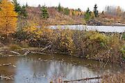 Beaver dam and lodge, northeastern Saskatchewan, Canada