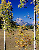 Mount Moran through aspen trees, Grand Teton National Park Wyoming USA
