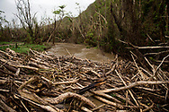 VEGA BAJA, PUERTO RICO - OCTOBER 10, 2017 -  Splintered logs in the Indio River on road PR-646 in Vega Baja, Puerto Rico where the center of Hurricane Maria cause some of the most extensive damage. Carmen Pantoja and her disabled son live nearby. (Photo/Jos&eacute; Jim&eacute;nez) Through the Iris of Hurricane Mar&iacute;a<br />