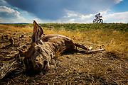 Mooney Hills, Colorado, USA, 20130614:. Dag 5 av RAAM, Race Across America. Foto: Ørjan F. Ellingvåg