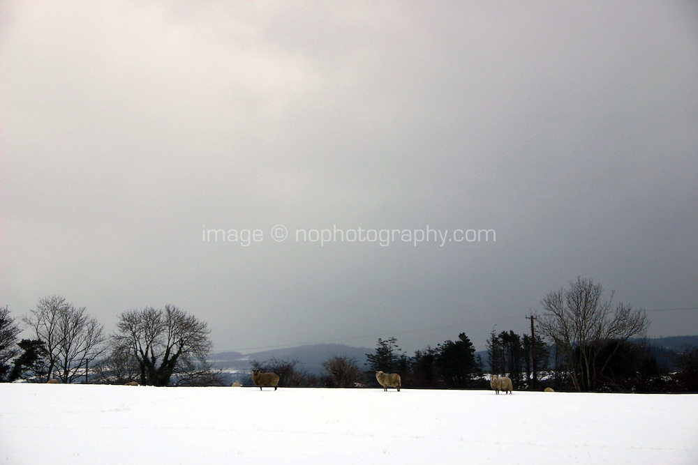 Winter landscape, Wicklow, Ireland