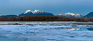 The Golden Ears mountains are a familiar sight from the Fraser Valley (especially Langley and Maple Ridge).  This view is photographed from Brae Island Regional Park's Tavistock Point in Langley, British Columbia with the unusual circumstance of a partly frozen Fraser River in the foreground.  The Golden Ears (Mount Blandshard) are McPhaden Peak, Edge Peak and Blandshard Peak.  Mount Robbie Reid can be seen on the right, and reflected in the Fraser River.