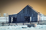 Infrared (IR) image - In contrast to some of the horse farms in Central Kentucky, this barn is a example of a tobacco drying barn.  It looks more run down that it actually is - those missing planks are actually by design.  Tobacco barns can add and remove those planks to help manage air flow across the drying leaves hanging from the ceiling of the barn.