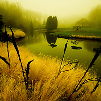 Reflections in a lake on a misty morning