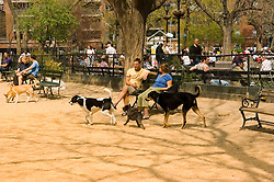 New York City, New York: Dog park in Washington Square in Greenwich Village  .Photo # ny311-15097  .Photo copyright Lee Foster, www.fostertravel.com, lee@fostertravel.com, 510-549-2202.