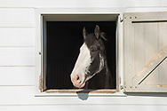 Horses, Stable, 134 Narrow LN East, Sagaponack, NY