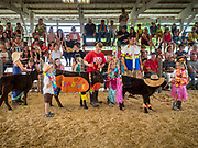 "27 JUNE 2019 - CENTRAL CITY, IOWA: Participants in the Kiddie Calf Show at the Linn County Fair. Participants dressed the calves up to reflect ""Fairadise,"" the theme of the 2019 Linn County Fair. Summer is county fair season in Iowa. Most of Iowa's 99 counties host their county fairs before the Iowa State Fair, August 8-18 this year. The Linn County Fair runs June 26 - 30. The first county fair in Linn County was in 1855. The fair provides opportunities for 4-H members, FFA members and the youth of Linn County to showcase their accomplishments and talents and provide activities, entertainment and learning opportunities to the diverse citizens of Linn County and guests.          PHOTO BY JACK KURTZ"