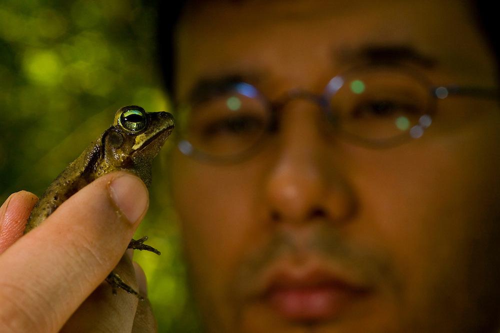 Sao Jose do Rio Preto_SP, Brasil...Programa Biota da Unesp, na foto pesquisador com um sapo...The Biota program of Unesp, In this photo a researcher with a frog. . .Foto: JOAO MARCOS ROSA / NITRO