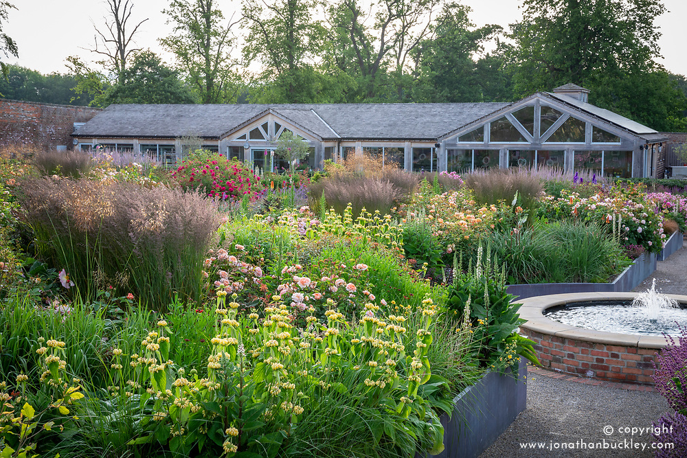 The rose garden at Wynyard Hall with Rosa 'Port Sunlight' - 'Auslofty' AGM and phlomis in the foreground