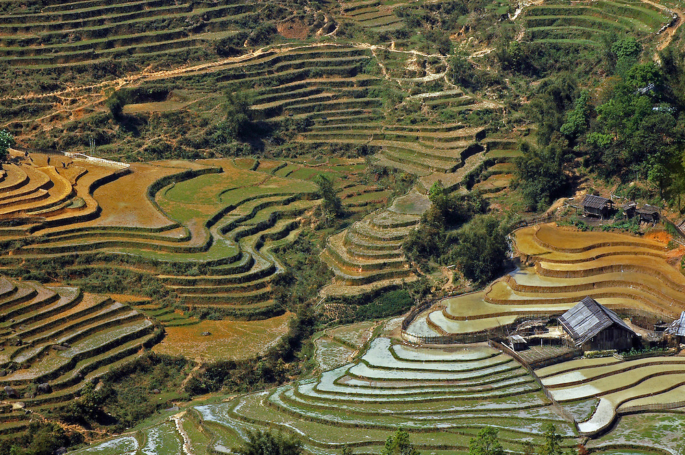 Terracing in Sapa, North Vietnam.